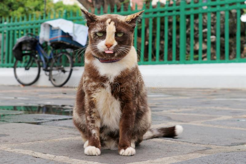 Cat Sitting bonita no assoalho no parque imagem de stock