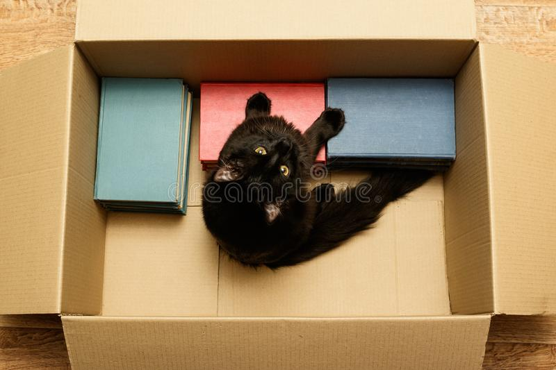 Cat sitting in a box with books stock images