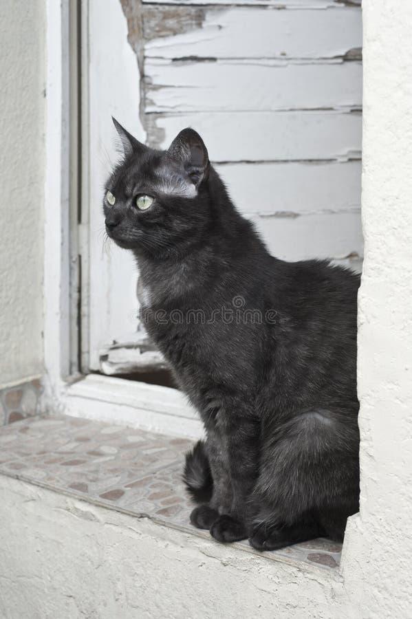 Cat sitting in doorway stock image