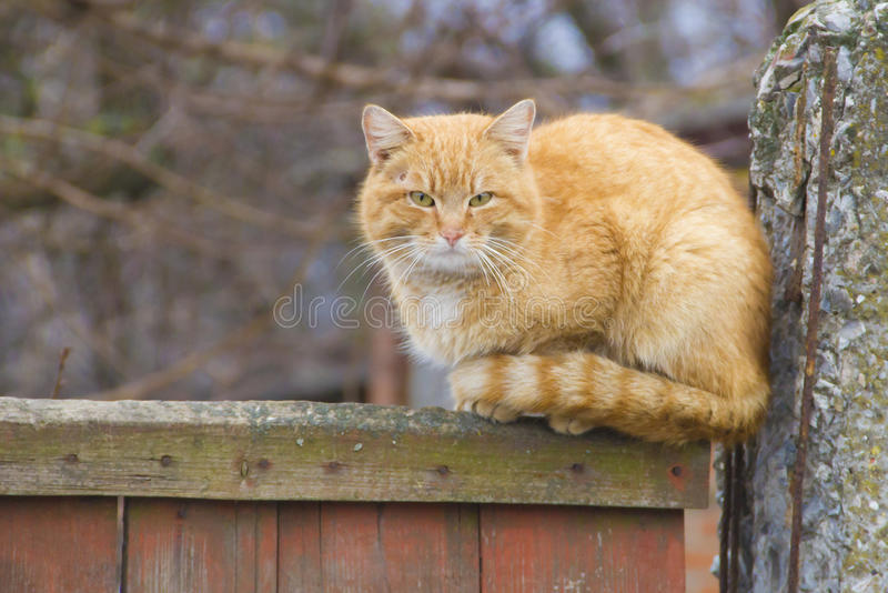 Download Cat sitting on the fence stock photo. Image of watching - 30339596