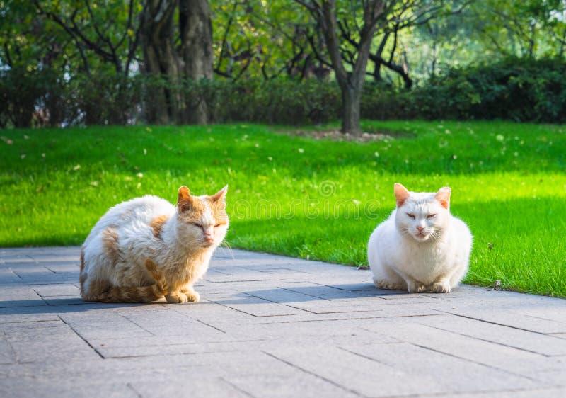 Cat Sitting On Footpath in un parco fotografie stock