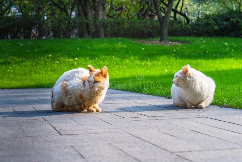 Cat Sitting On Footpath in un parco fotografie stock libere da diritti