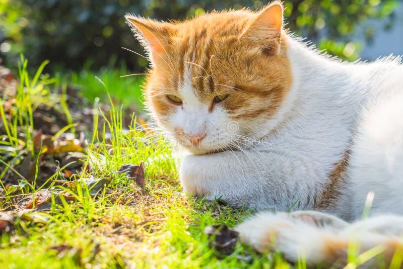 Cat Sitting On Footpath in un parco della Cina fotografia stock libera da diritti