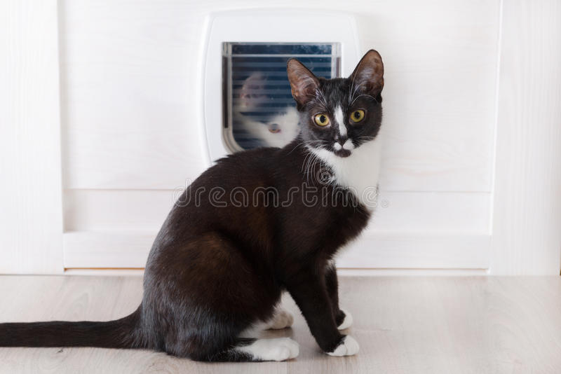 Cat sitting in front of the cat door. S and other cat looking through it royalty free stock photography