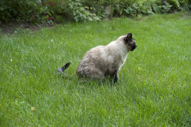 Cat sitting on the grass. Cat relaxing out side sitting on the grass royalty free stock photos