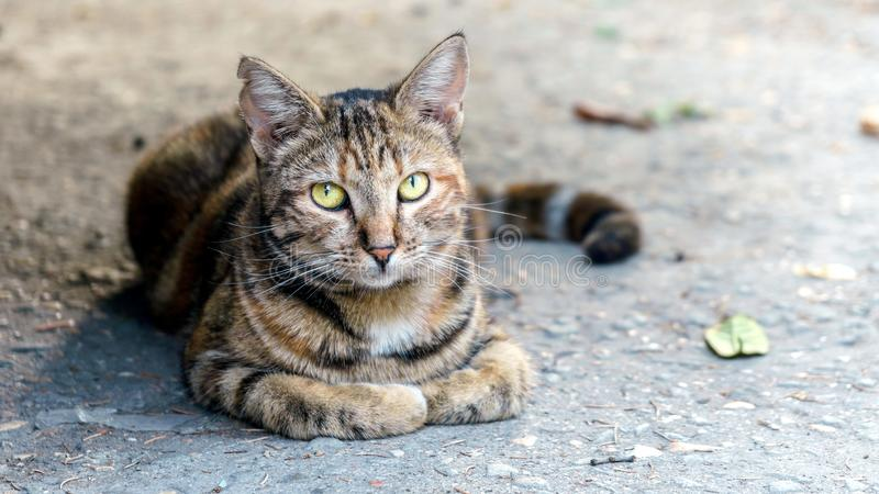 The cat is sitting on the ground on the ancient street stock photography