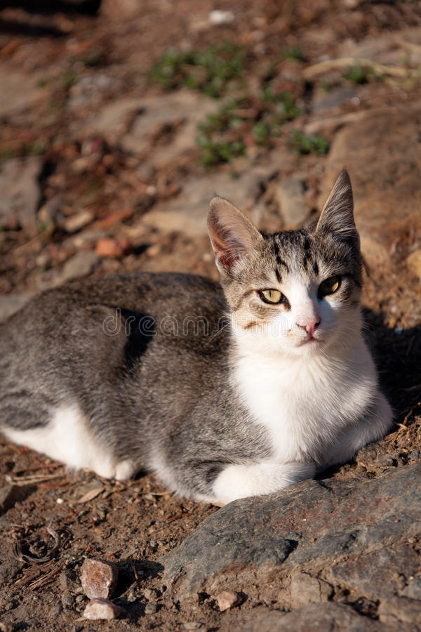Cat sitting on the ground, cooling down royalty free stock image