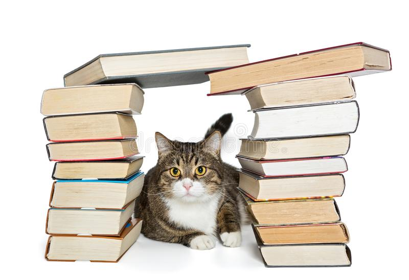 Cat sitting in the house of books stock photos