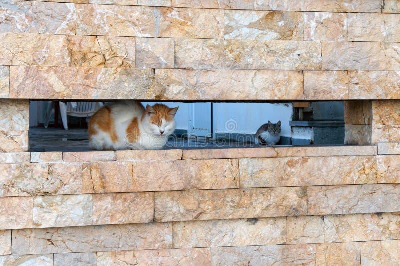 Cat Sitting i en vaggavägg royaltyfri foto