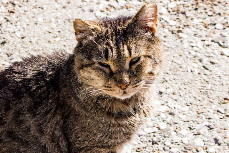 Cat Sitting i solen arkivfoton