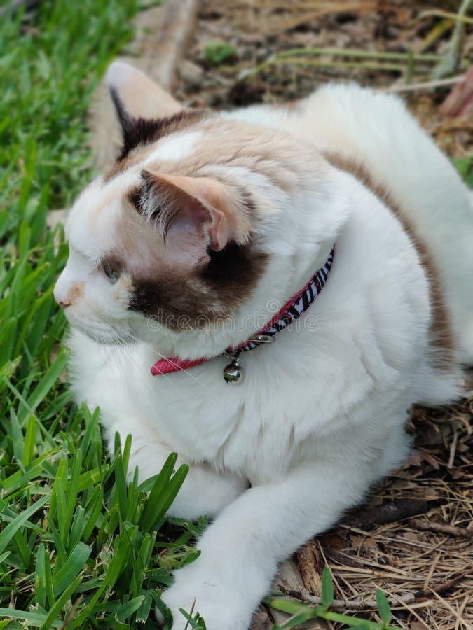 Cat Sitting i trädgården som ser av kamera royaltyfri fotografi