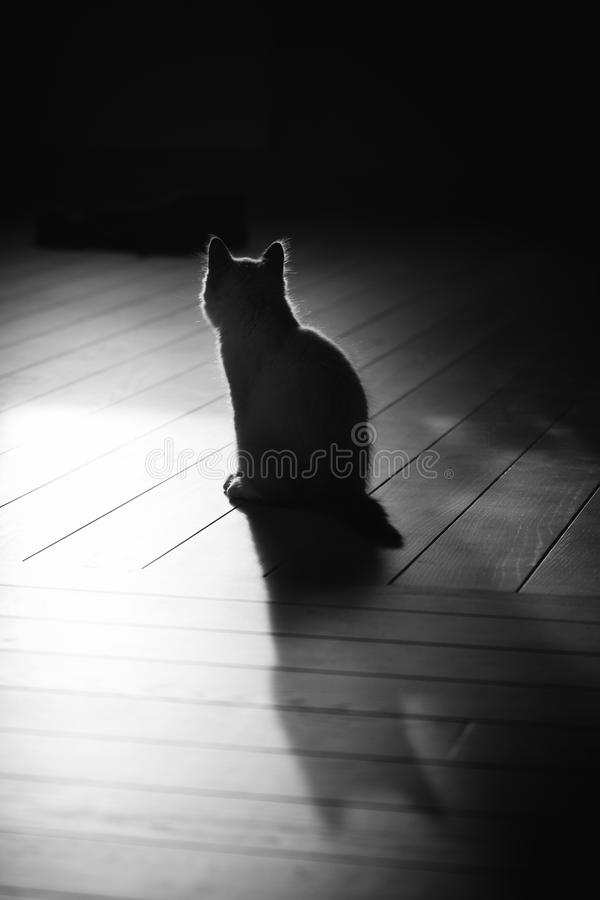 Cat sitting and its shadow stock photos