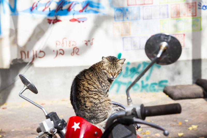 A cat sitting on motorbike seat stock photography