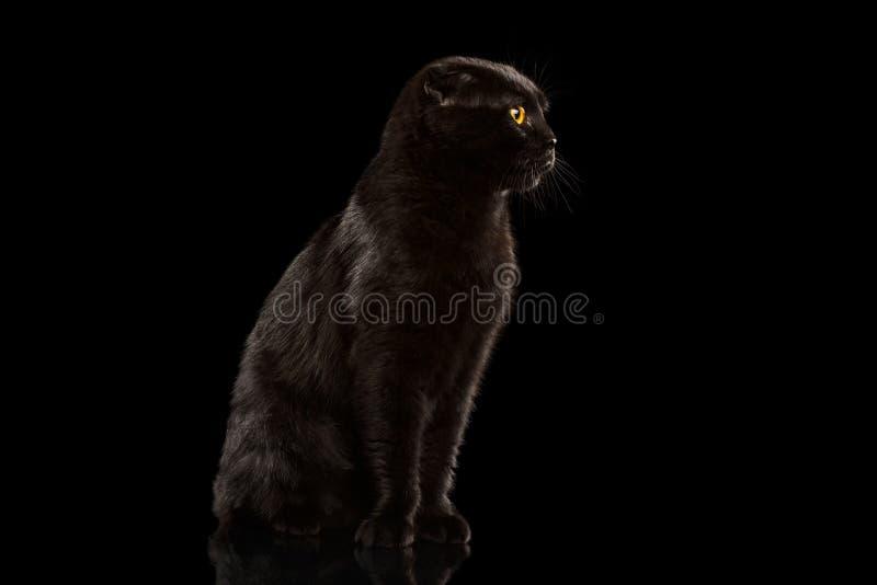 Cat Sitting noire sur le miroir et le regard grincheux photographie stock libre de droits