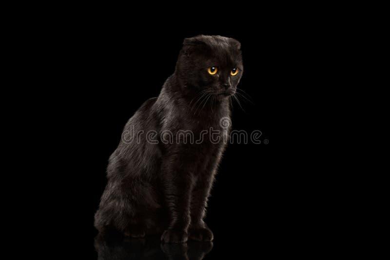 Cat Sitting noire sur le miroir et le regard grincheux photo stock