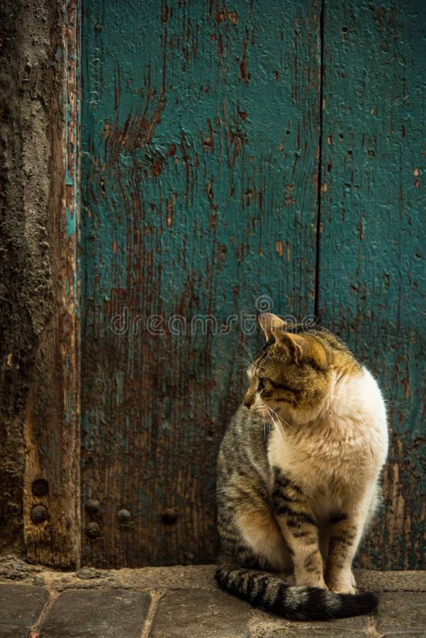Cat sitting in old street in Morocco.  royalty free stock photography