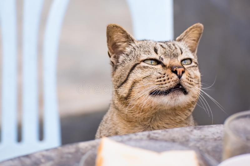 Cat sitting outdoors looking up for food in the morning.Thailand stock photography