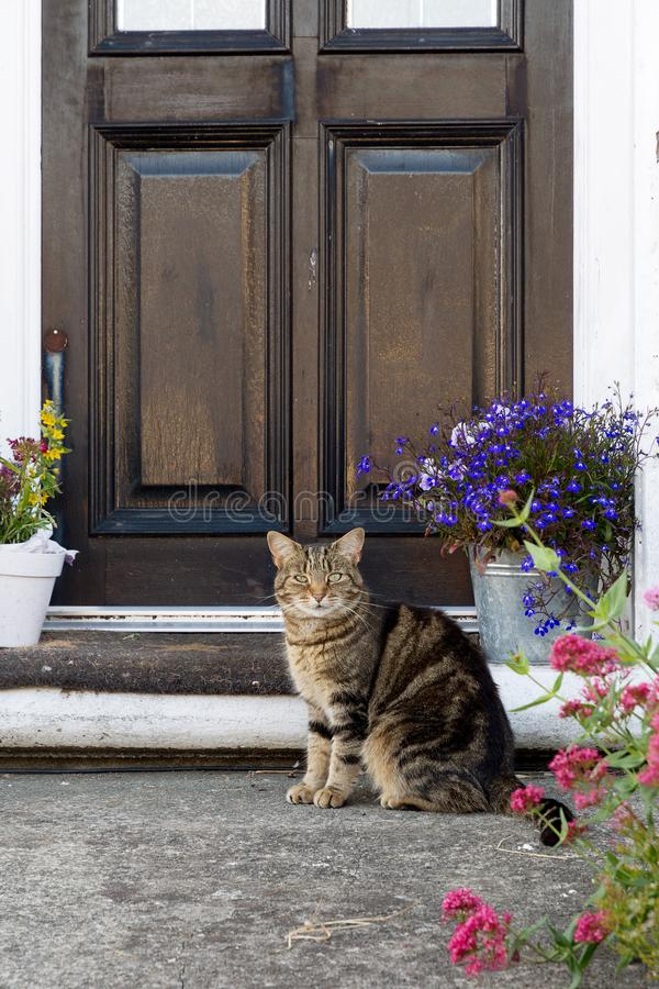 Cat sitting outside of a front door royalty free stock images