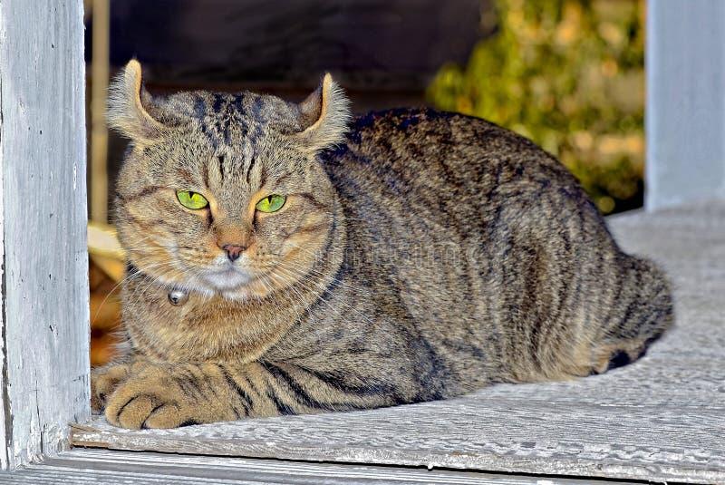 Cat Sitting på farstubron av ett gammalt hus arkivfoto