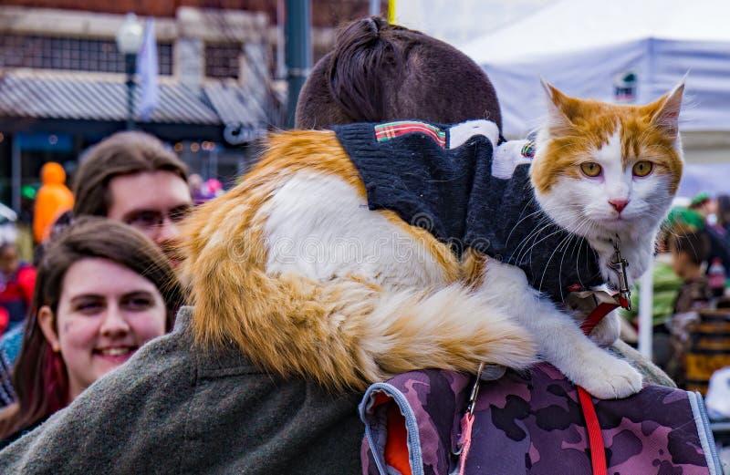 Cat Sitting på hans Owner's skuldror arkivfoton