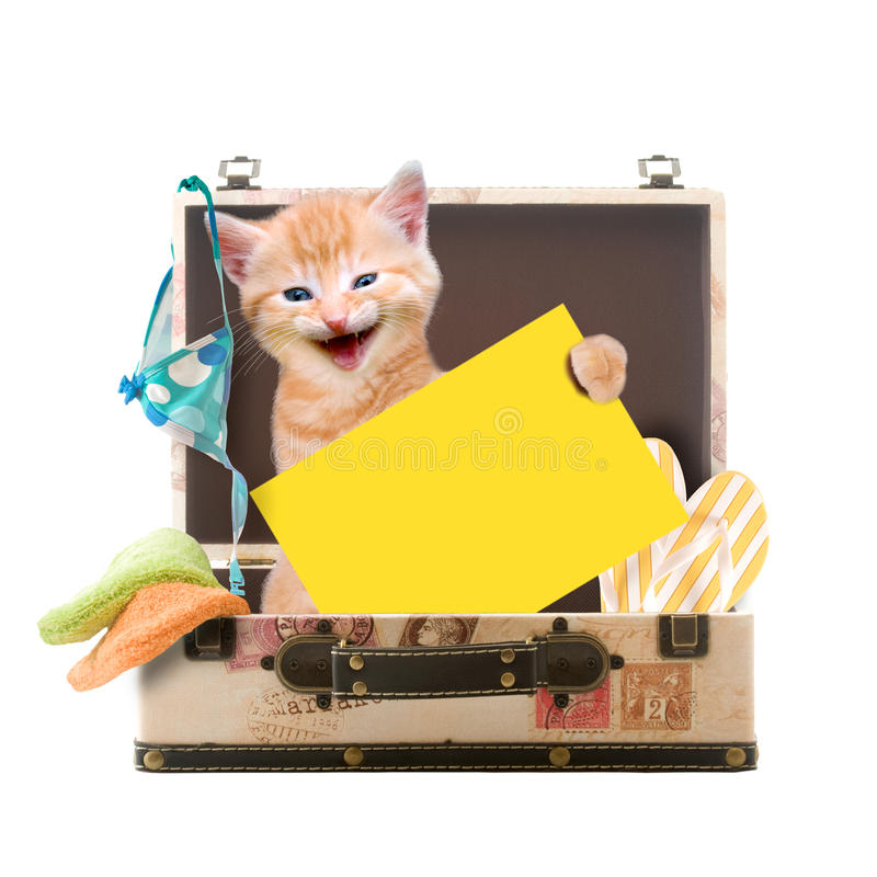 Cat sitting with poster in a suitcase. Isolated on white background stock images