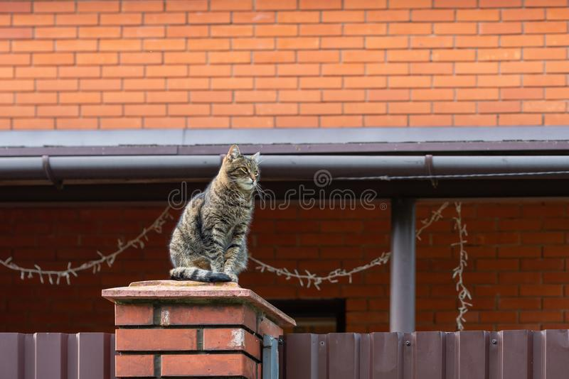 Cat sitting on a red brick fence post on the background of a brick house. Copy space stock images