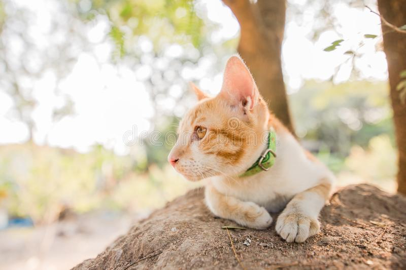 A cat sitting on the rock in the forest royalty free stock photography
