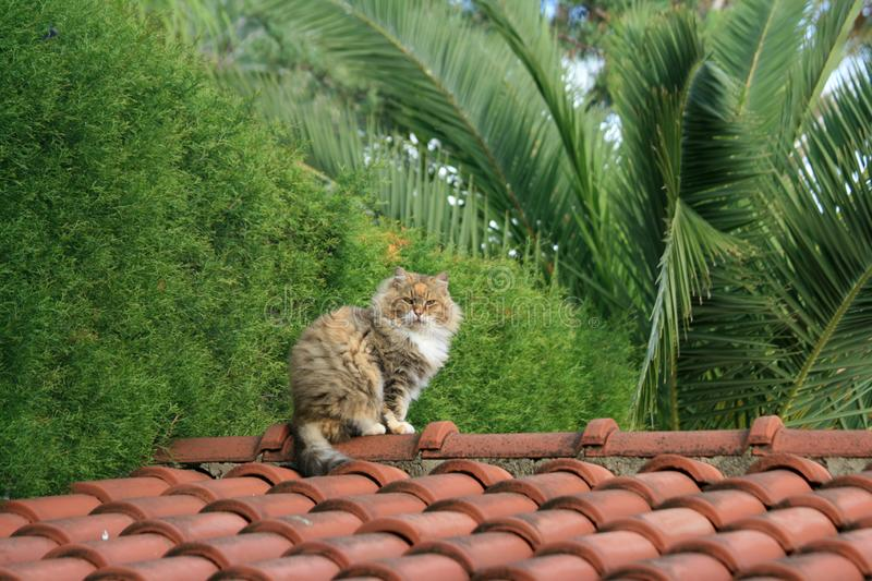 Cat sitting on a rooftop. A fluffy tubby cat sitting on top of a tiled roof royalty free stock photos