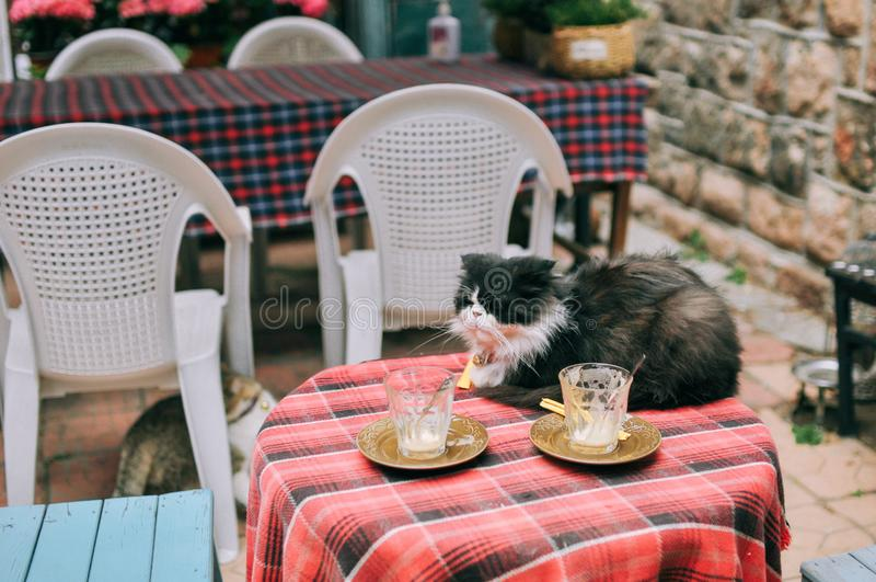 Lazy cat sitting on a table in restaurant stock photos