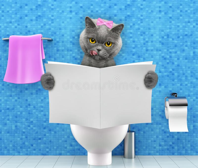 Cat sitting on a toilet seat with digestion problems or constipation reading magazine or newspaper royalty free illustration