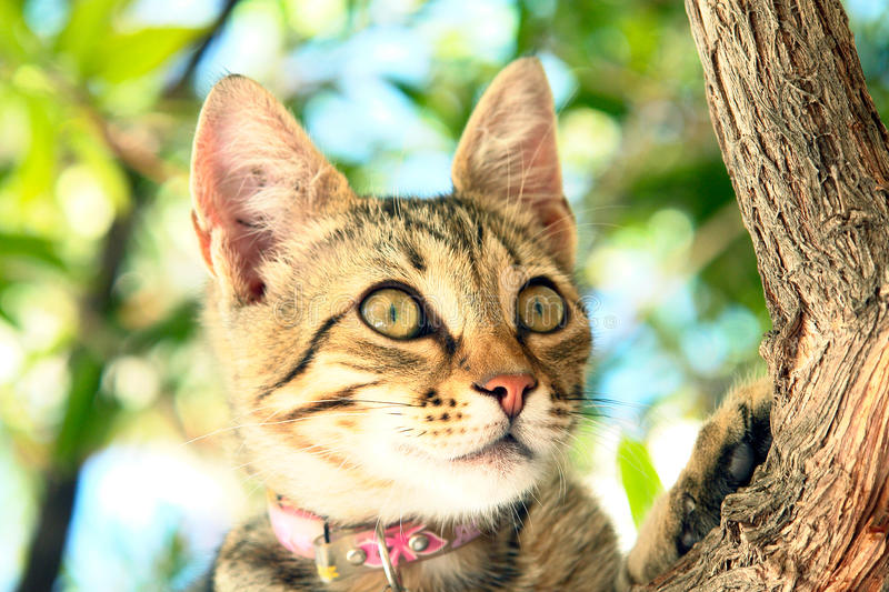 Download A Cat sitting on a tree stock photo. Image of kitten - 26709388