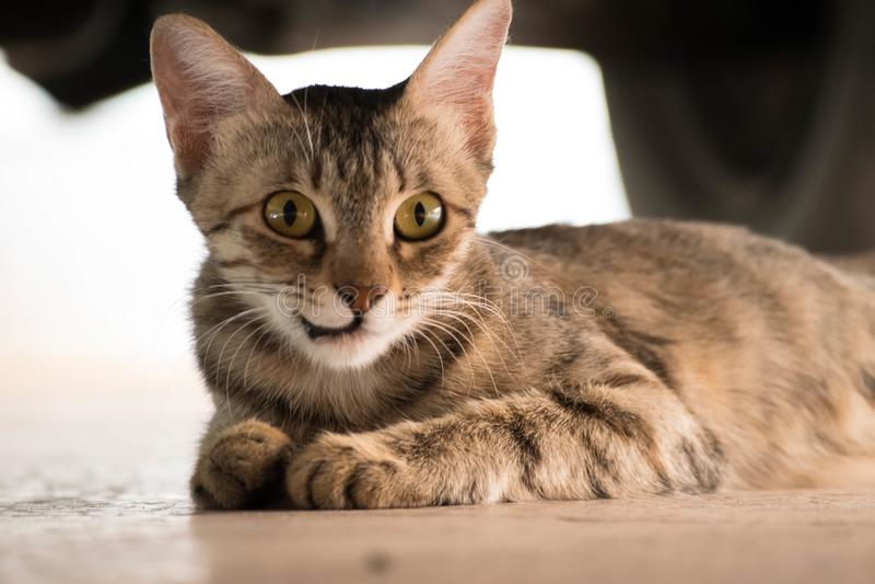 Cat Sitting under thecar royaltyfri fotografi