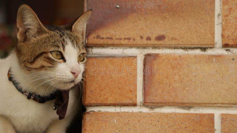 Cat Sitting vid tappningväggen royaltyfria foton