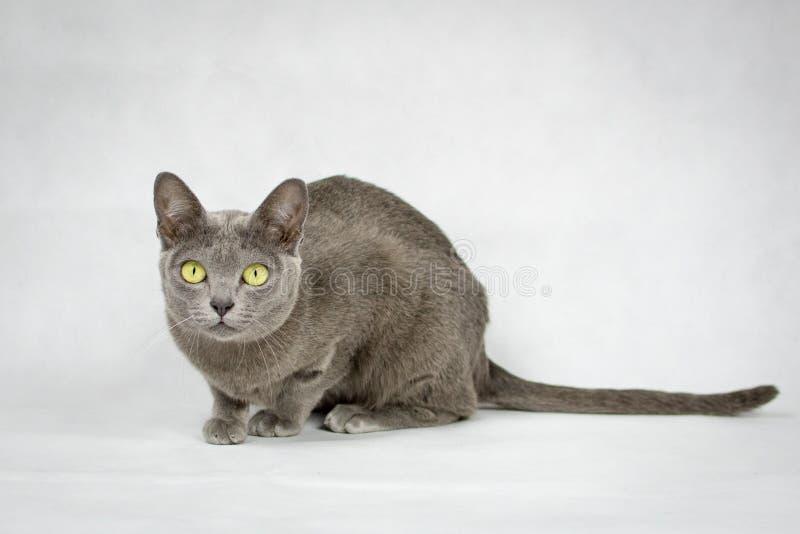 Cat sitting on white background stock image