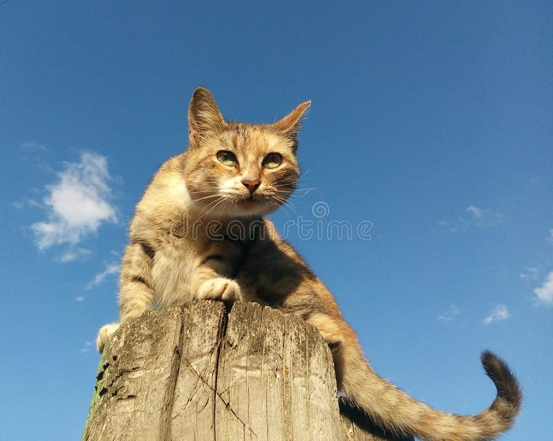 cat sitting on a wooden pillar stock photography