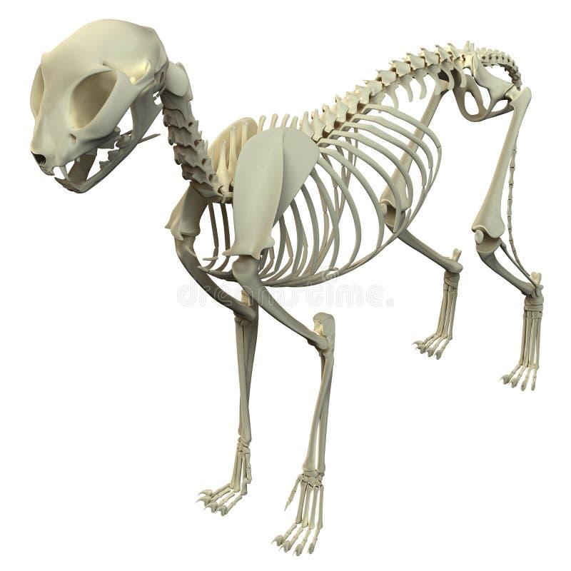 Cat Skeleton Anatomy - Anatomy Of A Cat Skeleton Stock Image - Image ...