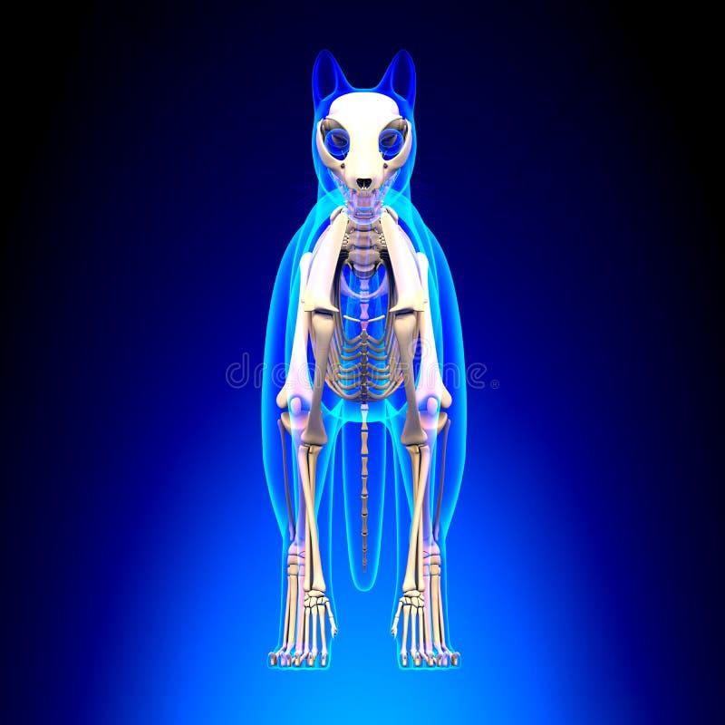 Cat Skeleton Anatomy - Anatomy Of A Cat Skeleton - Front View Stock ...