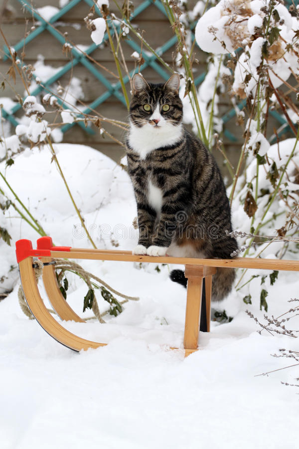 Cat on a sled stock photo