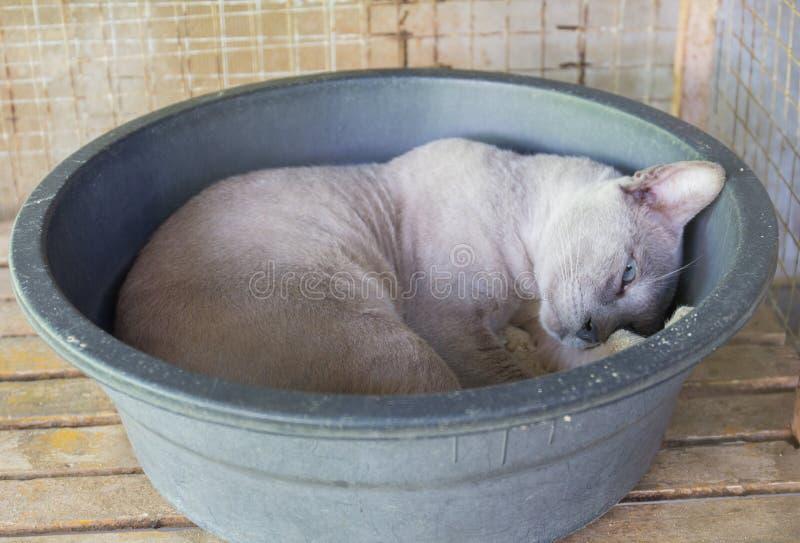 Cat Sleep arkivfoton
