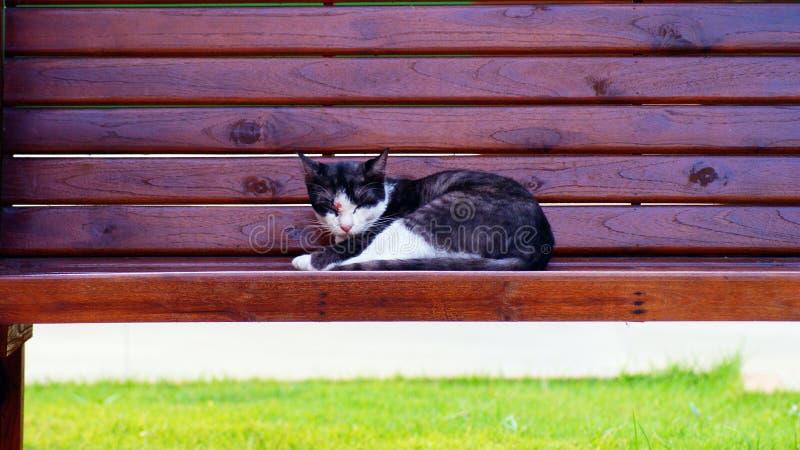 Cat Sleep photographie stock libre de droits
