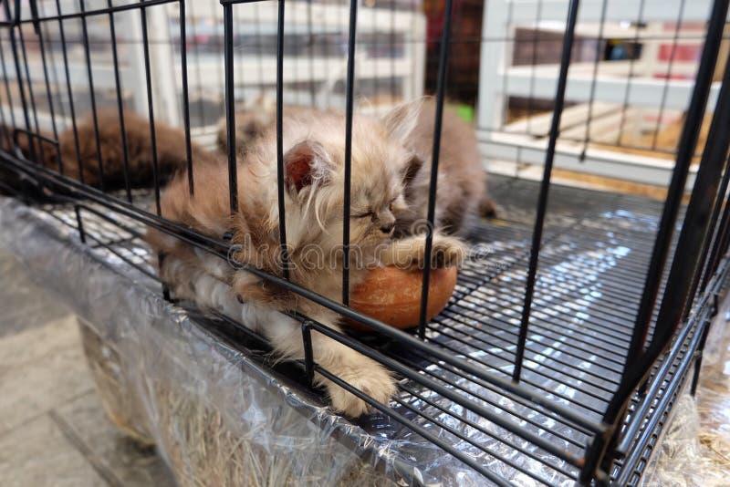 Cat Sleep photographie stock