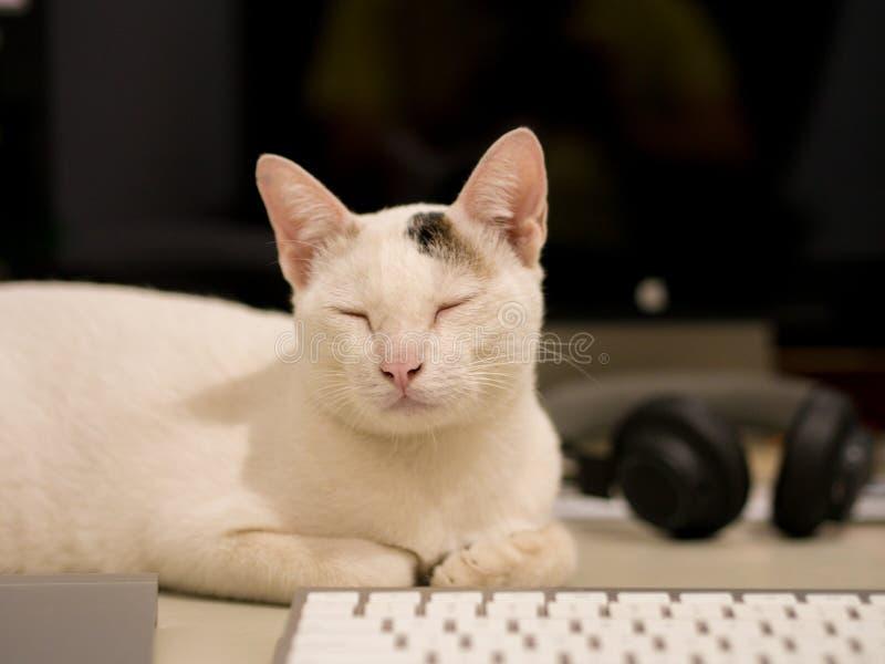 Cat Sleep behind Keyboard stock image