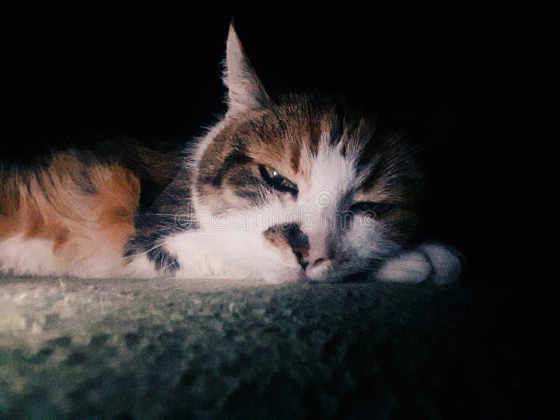 Cat sleep stock image