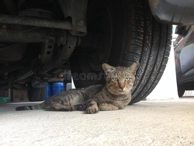 Download Cat Sleep Sit Under Car Mince Image stock - Image du mammif, jeune: 87706675