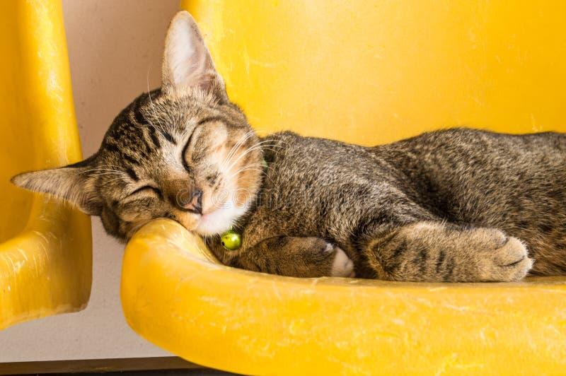 Cat Sleeping stock fotografie