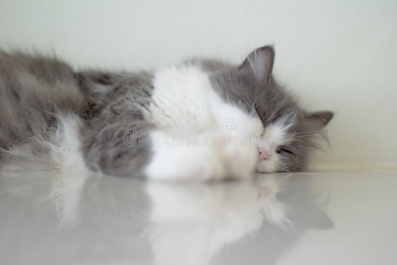 Cat Sleeping royalty-vrije stock fotografie