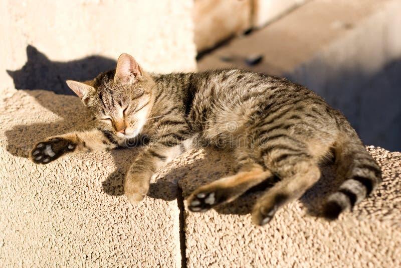 Cat Sleeping arkivbild