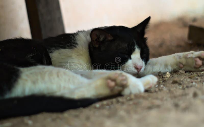 Cat Sleeping lizenzfreie stockfotos