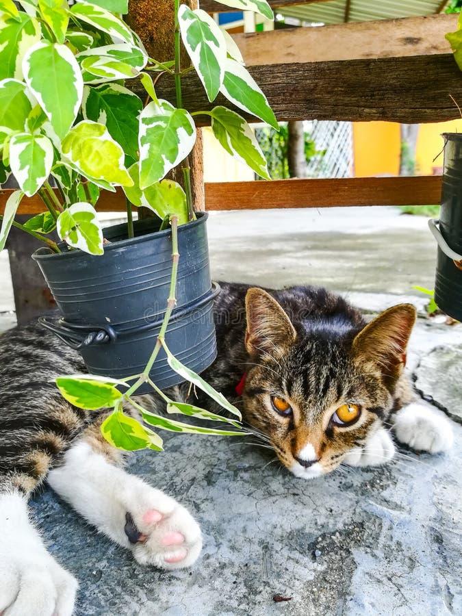 Cat Sleeping photos stock