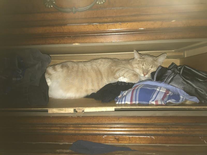 Cat Sleeping alaranjada na gaveta fotografia de stock royalty free